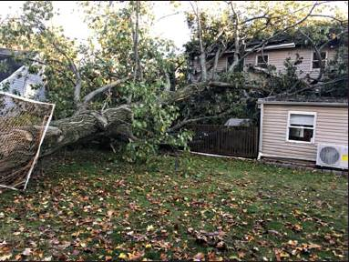 Storm Topples Trees, Damages Houses, Causes Power Outages