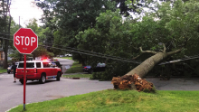 Firefighters Respond to Tree Down on Wires